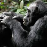 Направления эволюции социальной организации животных