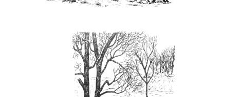 Благодаря сигнальному полю популяция обладает своего рода наследственностью, но «внешней» и как бы ламарковской, где преемственность воспроизводства структуры населения вида на конкретной территории обеспечивается элементами среды...