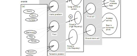 Ритуализированные демонстрации отличает примат формы над действием, и распознавания образов над изменением состояния после второго даже когда они выступают как классические релизеры. Это особенно верно для так называемых сигналов-символов (referential signals),...