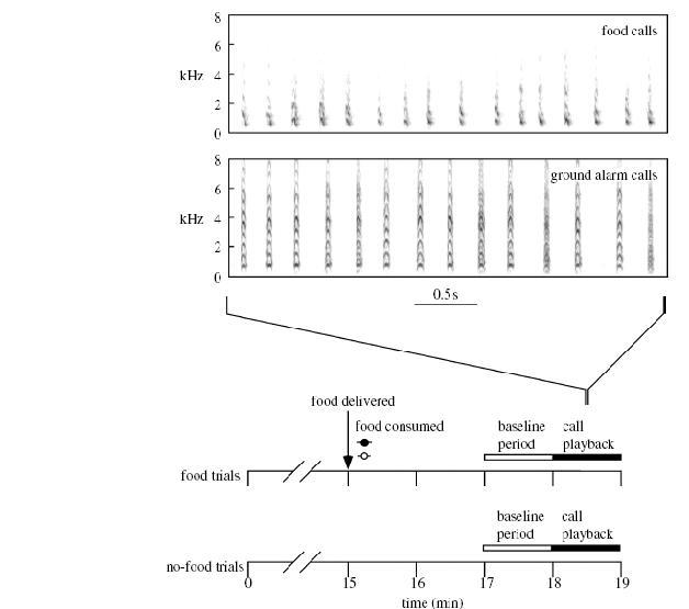 Исследование коммуникативного эффекта пищевых сигналов домашних кур – информирование или манипуляция?