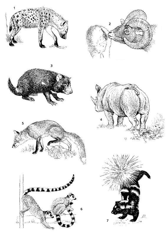 Оставление запаховых меток различными млекопитающими (по Макдональду, 2007): 1 — пятнистая гиена (Crocuta crocuta) оставляет метку железами на подошвах лап; 2 — снежный баран (Ovis nivicola) обнюхивает сородича для определения его половой принадлежности; 3 — сумчатый дьявол (Sarcophilus harrisii) трется о землю пахучими железами, расположенными вокруг ануса; 4 — белый носорог (Ceratotherium simum) метит границу своего участка калом; 5 — лисица (Vulpes vulpes) использует мочу для обозначения территории; 6 — кошачьи лемуры (Lemur catta) размазывают секрет, выделяемый железами ладоней, по хвосту; 7 — угрожающая поза пятнистого скунса (Spilogale putorius). Источник