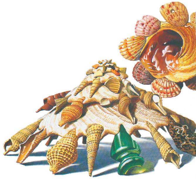 Бледноватая ксенофора (Xenophora palllidula) всю жизнь находит и прикрепляет к своей раковине любые предметы, которые попадаются на дне, чаще всего ракушки других моллюсков.