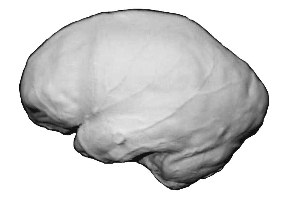 Эндокран Homo heidelbergensis (Брокен-Хилл) Иллюстрация из книги: Дробышевский С.В. Эволюция мозга человека (анализ эндокраниометрических признаков гоминид). М., КомКнига, 2007