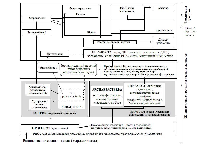 Рис. 4. Формирование глобальных таксонов (по [146, 147] с изменениями по [139]).