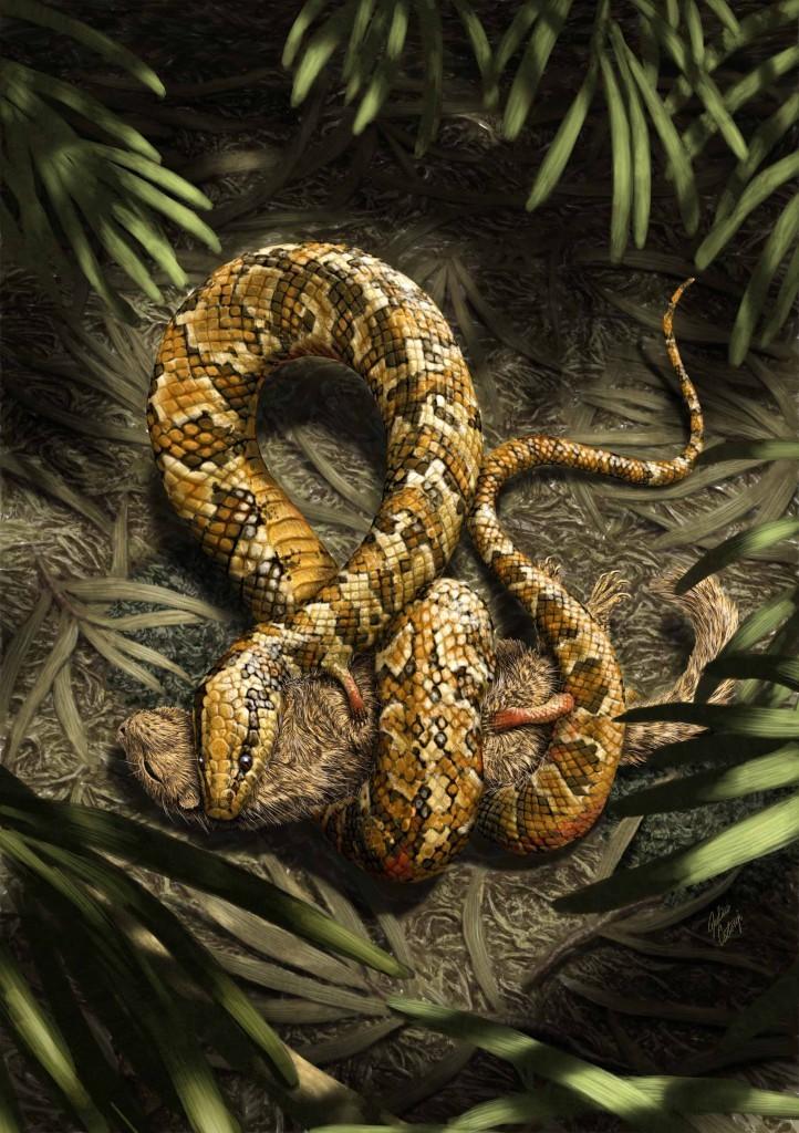 А еще лапы Tetrapodophis amplectus могли служить для захвата добычи или удержания партнера во время брачных игр, полагают авторы описания. Собственно, название ископаемого вида переводится как «четвероногая змея-обнимашка». Иллюстрация: Julius Csotonyi