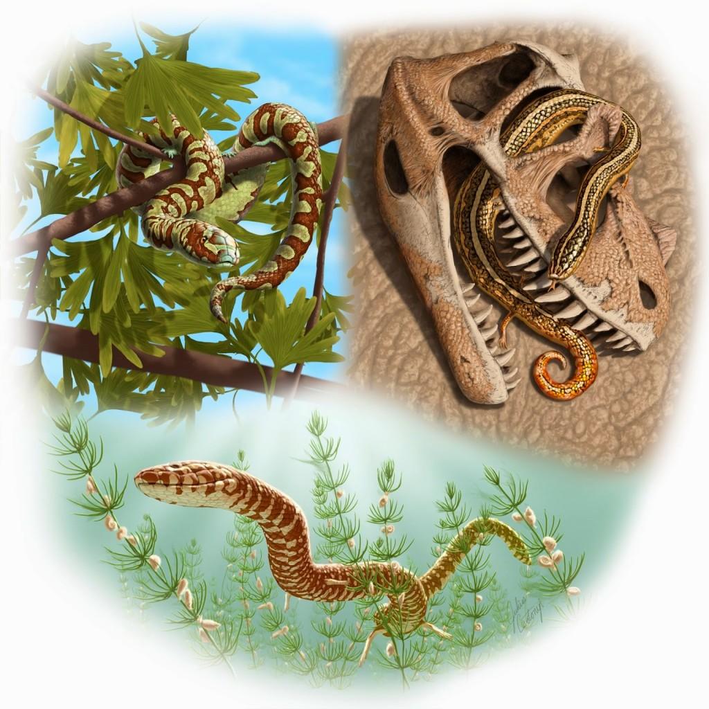 Portugalophis lignites (155 млн лет, Португалия), Diablophis gilmorei (155 млн лет, США), Parviraptor estesi (144 млн лет, Англия) – новые рекорды древности для змей. А самая древняя – Eophis underwoodi (167 млн лет, Англия) – не изображена. Иллюстрация: Julius Csotonyi