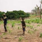 Опустынивание обостряет ситуацию в странах Африки и Азии
