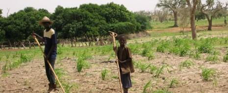 Колесо закрутится заново. Быть может не будет голода, быть может, на какое-то время страны региона не будут сотрясаться голодными бунтами, но это никоим образом не стабилизирует политические...