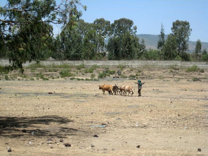 herder-720x540