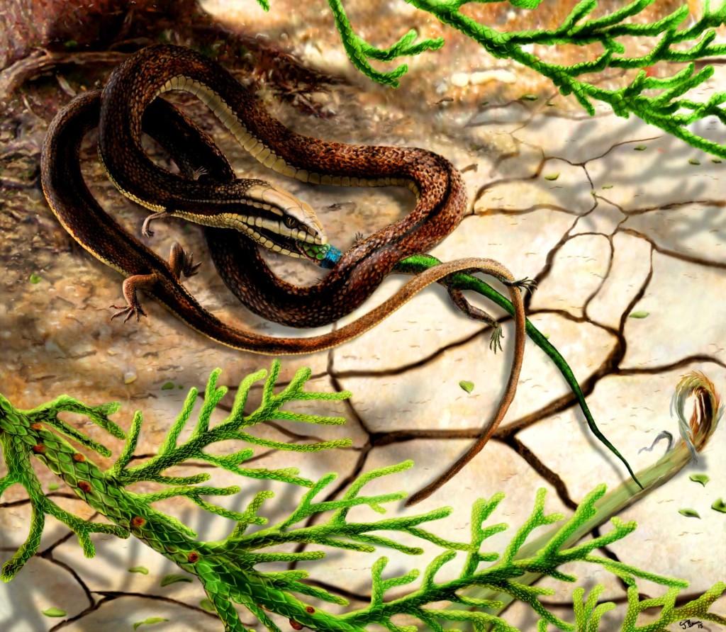 image_3057_1e-Tetrapodophis-amplectus