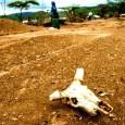 Единственно, что ООН точно научилась делать быстро и на приемлемом уровне — это поставлять тонны медикаментов и гуманитарных грузов в районы пораженные эпидемиями, голодом и...