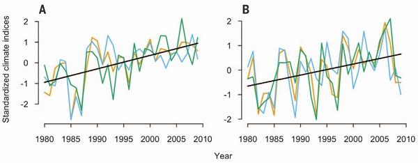 Рис. 5. Изменения климата в Европе (A) и США (B) в последние десятилетия. Синие линии — средняя годовая температура, оранжевые линии — средняя температура самого холодного месяца года, зеленые линии — годовая сумма температур выше 5°C. Единицы измерения и разброс значений у этих показателей не совпадают, поэтому их нормализовали и представили на вертикальной оси в виде условных индексов с нулевым средним и единичной дисперсией. Черные прямые — линии регрессии, отражающие «обобщенный» тренд для всех трех климатических параметров. Наклон регрессии на обоих континентах не демонстрировал значимых различий — следовательно, потепление происходило более или менее синхронно. Рисунок из обсуждаемой статьи в Science