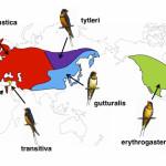 «Длинная история про ласточкин хвост»
