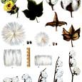Говоря об эволюции биоразнообразия прежде всего подразумевают эволюцию линейную и дивергентную. В работе рассмотрены случаи эволюции, связанной с перебором пространств возможностей. Такие пространства формируются на различных уровнях организации живого – от популяционно-ценотического и организменного до уровня биополимеров – белков и последовательностей ДНК и далее – до ключевых...