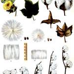 Дивергентно-конвергентные механизмы в эволюции биоразнообразия