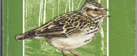 Острая необходимость сохранения популяций луговых и околоводных птиц (в первую очередь редких видов ржанкообразных) в сложившихся социально-экономических...