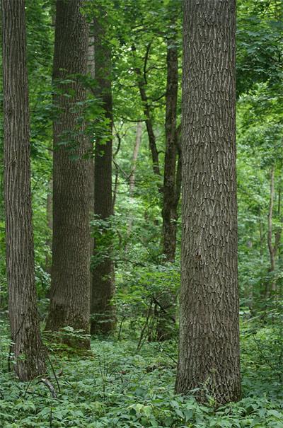 Дубравы Шипова леса