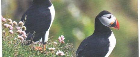 Даже признание всеми, что облигатно-колониальные виды в период гнездования не демонстрируют антихищническое поведение вообще и не защищают кладку и птенцов, не изменило...