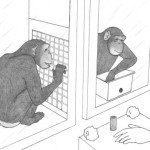Социально-когнитивные способности антропоидов:  эволюционные предпосылки нравственных основ  сотрудничества у людей