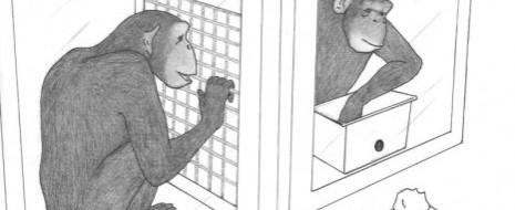 В 2000-х годах исследования социо-когнитивных способностей у животных в значительной степени сконцентрировались на проблемах «кооперации» или «сотрудничества», в первую очередь человекообразных обезьян (Moll, Tomasello, 2007). Отчасти, обсуждение возможностей и...