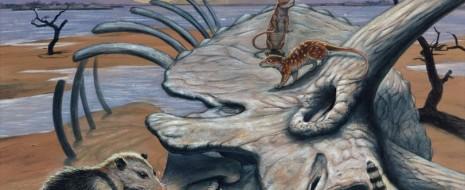 Открытия ископаемых за последние 30 лет радикально изменили традиционные взгляды на эволюцию мезозойских млекопитающих. Кроме того, недавние исследования дали более подробную картину мелового распространения цветковых растений. Здесь мы разбираем схемы морфологического разнообразия и функциональной морфологии, связанные с диетой ранних млекопитающих. Было выполнено два анализа...