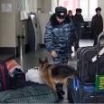 Print PDF Все чаще на транспорте мы можем видеть патрули с собаками, задача которых — обнаружить взрывчатку, или наркотики. Недавнее исследование (Lit, Schweitzer, & Oberbauer, 2011) в журнале Animal Cognition […]