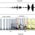 Пение самок воробьиных птиц: исключение или закономерность?