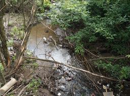 Зеленая сеть и ленточные парки нужны для беспрепятственных миграций животных (прежде всего, птиц и насекомых, необходимых полноценному биоценозу), для проветривания местности, для...