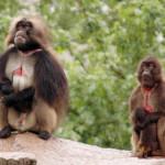 Социальный контроль поведения млекопитающих: ревизия концепции доминирования