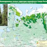 Импортируя лес, мы экспортируем экологический ущерб