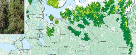 Рост потребления древесины в Финляндии и КНР сопрягается с ростом природоохранных усилий, почему местные леса защищаются всё лучше и лучше, а потребление древесины обеспечивается ростом...