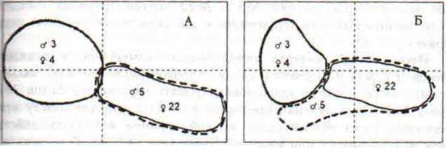 Рас 42. Взаимное расположение семейно-групповых участков монгольских песчанок дo начала (А) и по окончании (Б) эксперимента с антидепрессантом парнатом. 1 – границы территории самца №3 и самки №4, 2- граница территории самца №5, 3- границы территории самки №22. Пунктиром показана осевая разметка площадки наблюдений. Масштаб 10 м.