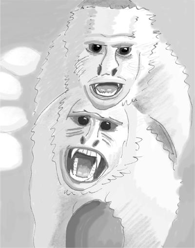 Два белоплечих капуцина принимают позицию «повелитель», так что их противник одновременно сталкивается с двумя угрожающими лицами с двойным набором зубов