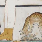 Палеогенетики обнаружили «двойное гражданство» у домашних кошек.