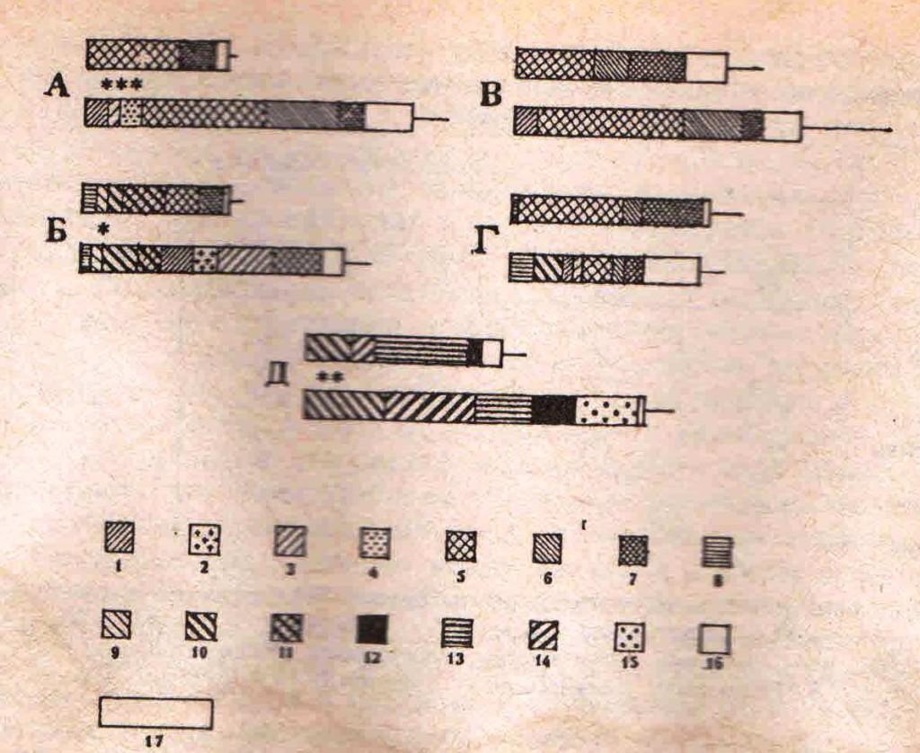 Рис. 1. Среднее число элементов поведения на одно взаимодействие у полуденных и краснохвостых песчанок. 1 — боковая стойка; 2 — теснение; 3 — копание лапами и хлестание хвостом; 4 — фронтальная вертикальная стойка; 5 — погоня; 6 — атака; 7 — схватка; 8 — назо-назальное обнюхивание; 9 — назо-апальное обнюхивание; 10 — следование; 11 — активное следование (при избегании у партнера); 12 — подставление под чистку; 13 — налезание; 14 — тактильный контакт; 15 — прочее: элементы менее 0,10 на 1 взаимодействие; 17 — соответствует 1 элементу на 1 взаимодействие. В сравниваемых парах: вверху — полуденные, внизу — краснохвостые песчанки. А—Д— типы взаимодействий: А — самцы во внутригрупповых конфликтах между собой (число взаимодействий, соответственно 44 и 88); Б — самцы во взаимодействиях с самками (41 и 101); В — самки во внутригрупповых конфликтах между собой (27 и 10); Г—самки во взаимодействиях с самцами (25 и 32); Д — молодые во взаимодействиях с самками (10 и 26). Звездочками обозначены пороги достоверных различий (Мэнн-Уитни U-тест)
