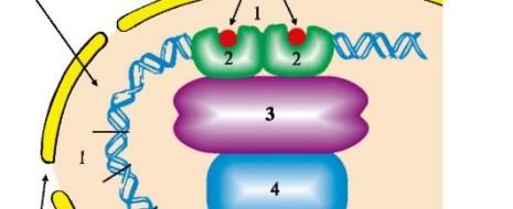 Print PDF Ушедшая декада нового тысячелетия ознаменовалась новыми (очередными) попытками сформулировать понятие «ген» и оно оказалось весьма запутанным. Попытаемся разобраться с генами там, где это еще возможно. Если меня спросить, […]