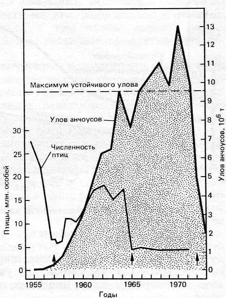 а) Перуанский анчоус Стрелки – годы Эль-Ниньо, когда ослабевает апвеллинг, рыбопродуктивность снижается, морские птицы откочевывают или гибнут в массе. Примечание. «Катастрофа, произошедшая с этим промыслом, некогда крупнейшим в мире, была огромна по своим масштабам. Перу лишилось сразу двух своих основных экспортных товаров: товарной рыбы и гуано, так как откладывавшие его птицы питались исключительно анчоусом. Когда этот промысел достиг своего максимума в 1970 г., экспорт двух этих товаров приносил Перу ежегодно 340 млн. долларов, что составляло 1/3 всех доходов от экспорта. Утеря этих источников твердой валюты способствовала быстрому росту внешней задолженности страны: в 80-е годы до 40% всех доходов от национального экспорта уходило только на обслуживание гигантского долга. А мир лишился белковой добавки, некогда широко использовавшейся в рационе свиней и домашней птицы». Brown Lester et al., 1985. State of the World. 1985. New York, W.W.Norton & Co., цит.по Д.Медоуз, Д.Медоуз и Т.Фиддаман, 1993. «Всемирное рыболовство».