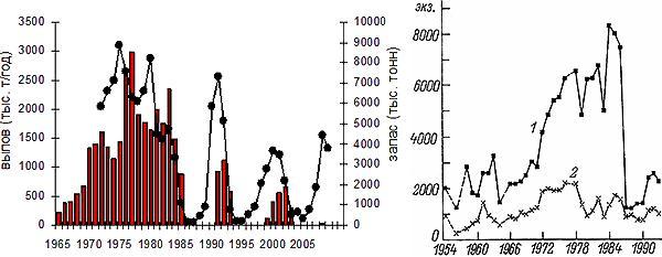 б) Мойва в Баренцевом море Обозначения. «Слева— запас (линия) и вылов (столбики) мойвы в Баренцевом море в 1965–2009гг. (по данным с сайта Системы мониторинга рыбопромысловых ресурсов Продовольственной и сельскохозяйственной организации ООН— ФАО). Справа— динамика численности тонкоклювых(1) и толстоклювых(2) кайр на базарах острова Харлов. Рис. из: Краснов и др., 1995»