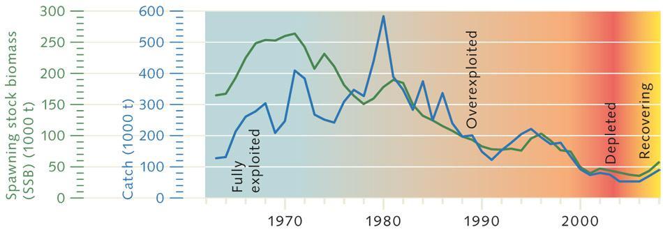 6. Атлантическая треска в Северном море и прилегающих. Примечание. В Северном море наблюдается коллапс промысла в ситуации, когда перелов сокращает количество зрелых рыб, способных производить потомство в количестве, достаточном для поддержания популяции (зелёная линия).