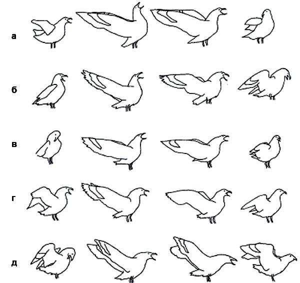 и бурого поморника (а—д — разные птицы, прорисовки по кадрам фильмов). Индивидуальная изменчивость не уничтожает общевидового облика демонстрации.