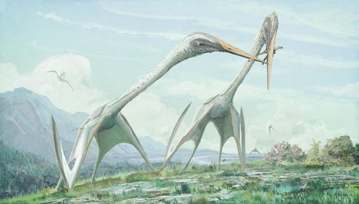 Арамбургианы (Arambourgiania philadelphiae) охотятся на мелких оперенных теропод в степях Лавразии. Рисунок из статьи D. Naish, M. P. Witton, 2017. Neck biomechanics indicate that giant Transylvanian azhdarchid pterosaurs were short-necked arch predators