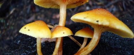 Зачем вообще грибы выделяют галлюциногены? Явно же не для того, чтобы радовать людей яркими впечатлениями. Эти грибы существовали на Земле задолго до людей. Так почему же у них развилась способность производить псилоцибин? И почему столь многие из них умеют это...