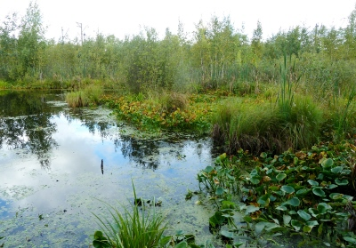 Филинское верховое болото