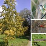 Птицы и муравьи не мешают друг другу есть гусениц