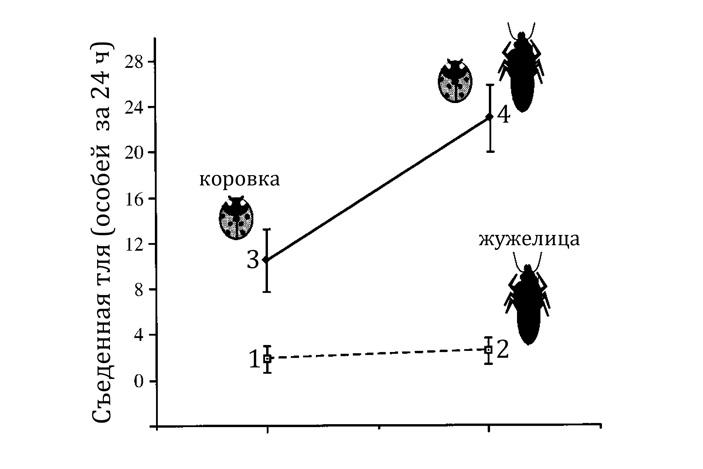 Количество съеденных тлей: 1 — нет хищников, 2 — присутствует только жужелица Harpalus pennsylvanicus, 3 — присутствует только семиточечная коровка, 4 — есть оба хищника. Данные получены в лаборатории. Видно, что без коровок жужелицы тлей почти не ели. А вот в присутствии коровок жужелицы заметно сокращали численность тлей. Рисунок из статьи John E. Losey, Robert F. Denno, 1998. Positive predator-predator interactions: enhanced predation rates and synergistic suppression of aphid population