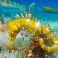 Палеоихтиологам многие годы не дает покоя вопрос о происхождении и эволюции как самих коньков, так и в целом очень разнообразной группы рыб, известных как игловидные. К сожалению, происхождение игловидных до сих пор остается загадкой,...
