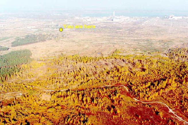 Рыжий лес – участок сосняка близ ЧАЭС, хвоя которого порыжела сразу после взрыва. Фото: © wikipedia.org
