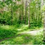 Методология изучения рекреационного воздействия на городские леса и подходы к проектированию рекреационных объектов