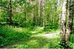 В 1960-1980-е гг. рекреационная экология (РЭ) была заметным направлением прикладной науки. Под РЭ понималось изучение комплекса экологических проблем, связанных с отдыхом человека в...