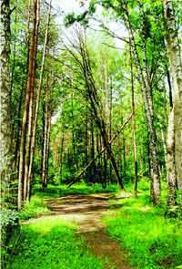 Множество мелких тропинок постепенно сливаются в большие тропы. Деревья вдоль троп ослаблены и нередко обламываются. Там же